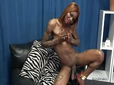 Casmia Gettens Hot Hung Tgirl